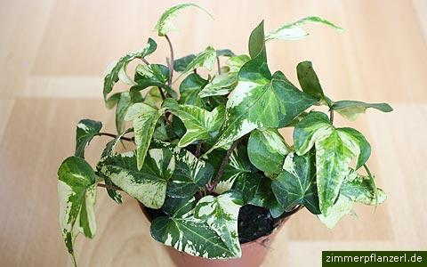 nasa empfiehlt diese 5 pflanzen reinigen die luft in deiner wohnung de. Black Bedroom Furniture Sets. Home Design Ideas