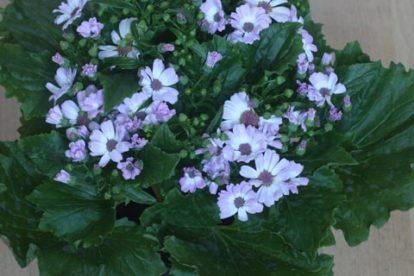 Zimmerpflanzen Bestimmen
