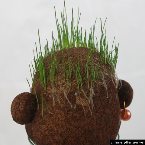 graskopf haare